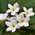 Low Histamine Dessert Recipe: Coconut Berry Bowl